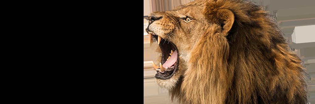 Zarley Lion